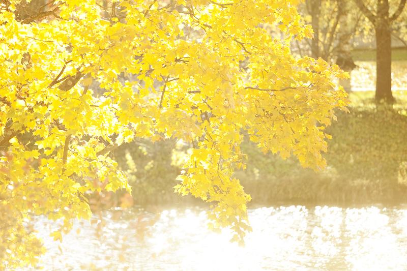 秋の恵みとルスカカラーのイメージ画像